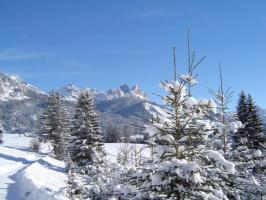 Winter Rot-Flüh