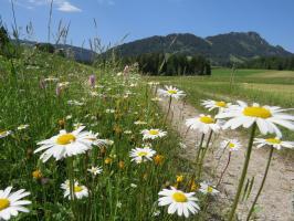 Frühling in Schattwald_Lofen