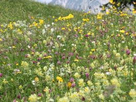 Bergkräuterwiese